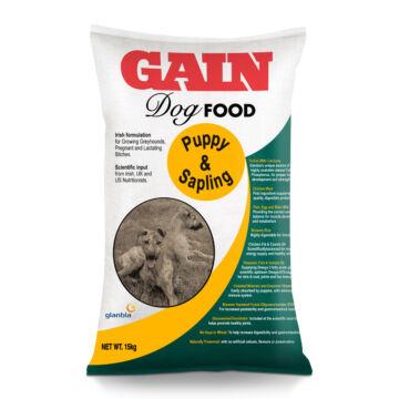 Greyhound Puppy & Sapling